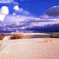 Desierto de Gibson