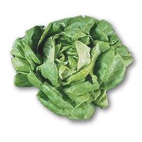 Lechuga