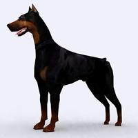 Doberman Pinscher (dog breed)