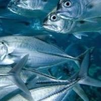 Greenpeace's Ranking of Spanish Supermarkets Sustainability in Selling Fish