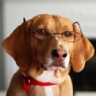 The Smartest Dog Breeds According to Dr. Stanley Coren