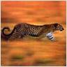 Ranking de los animales m�s veloces en tierra