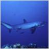 Ranking de los peces que nadan más rápido