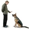 �Cu�l raza de perro te parece la m�s facil de adiestrar?