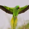 ¿Cuál es el ave mas hermosa del mundo?