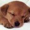 Ranking de las mascotas m�s comunes en los hogares del mundo