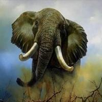 Ranking de los mamíferos terrestres más rápidos de la naturaleza