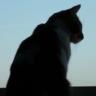 Ranking de las razas de gato m�s bonitas