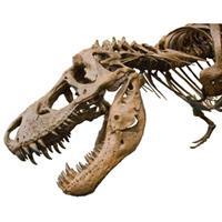 Ranking de los dinosaurios m�s populares