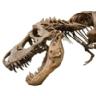 Ranking de los dinosaurios más populares