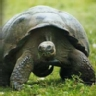 Ranking de los animales más longevos del mundo