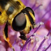 ¿Cuáles son los insectos y bichos más repelentes?