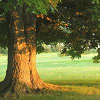 ¿Cuál es tu árbol favorito?